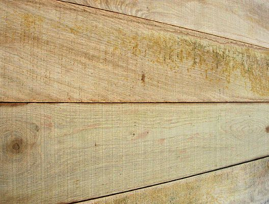 British Elm Green Sawn Square Edge